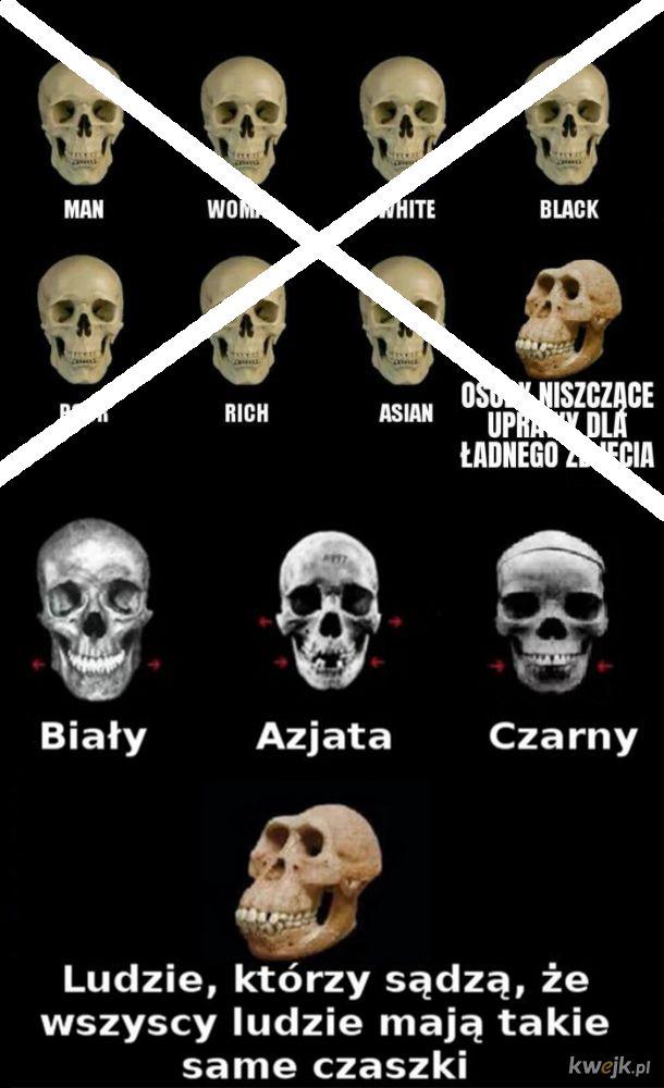 Mit o braku różnicy w kształcie czaszek między rasami obalony. ale nadal wszyscy ludzie to bracia.