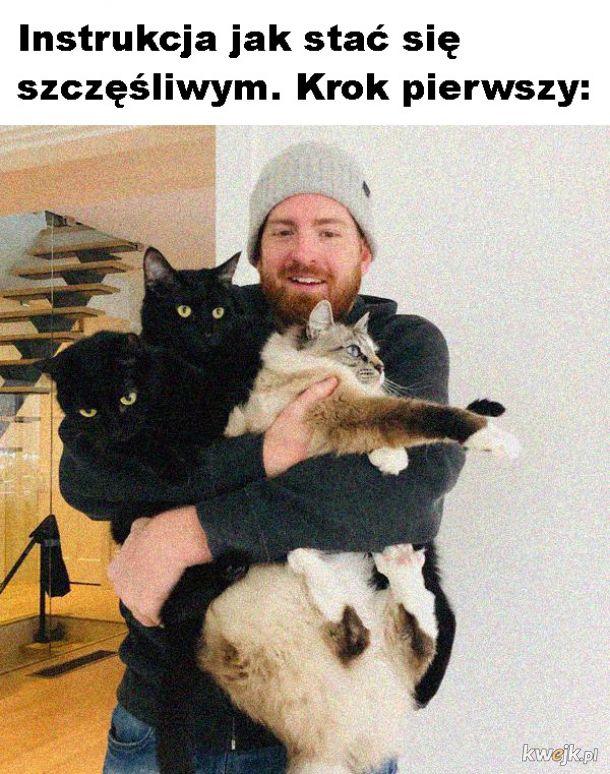 Bukiet kotów