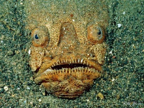 Dlaczego wszystko, co mieszka na dnie oceanu musi być straszne?