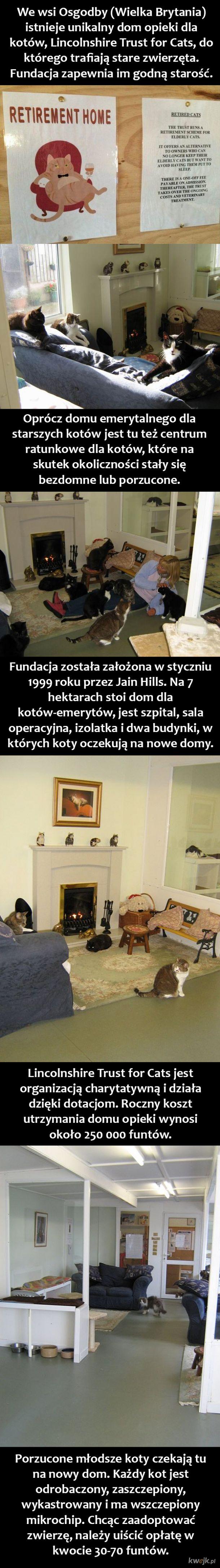 Dom opieki dla kotów