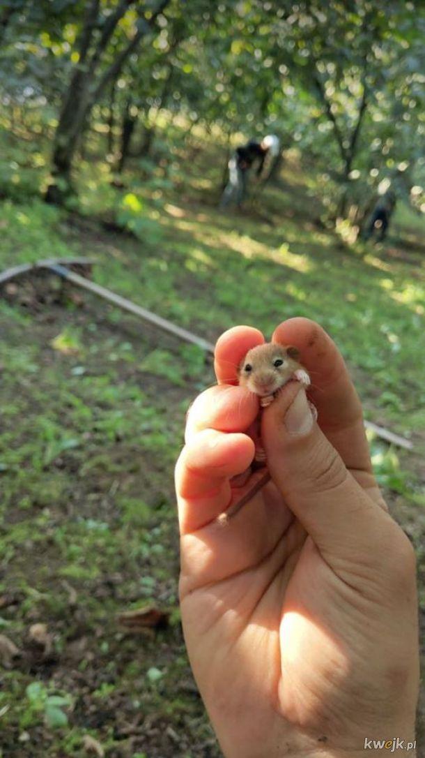 Małe zwierzątka są urocze!