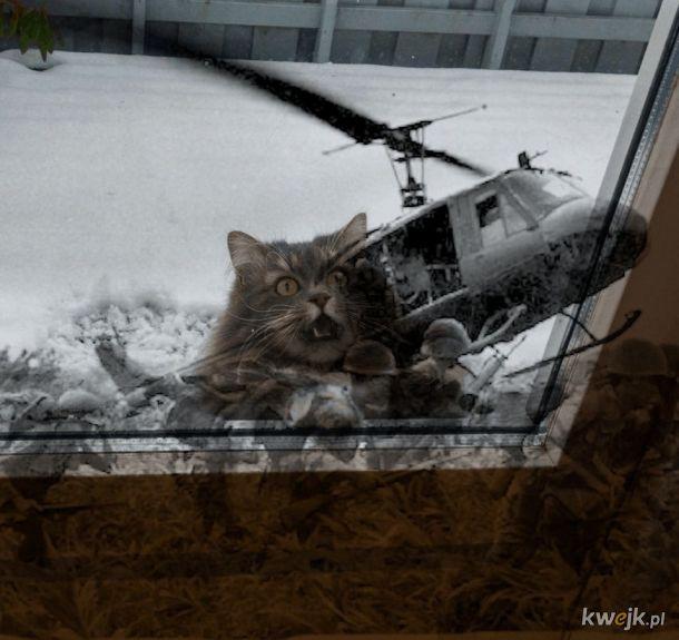 Kot, który mocno chciał wejść do domu i dostarczył materiału królom fotoszopa