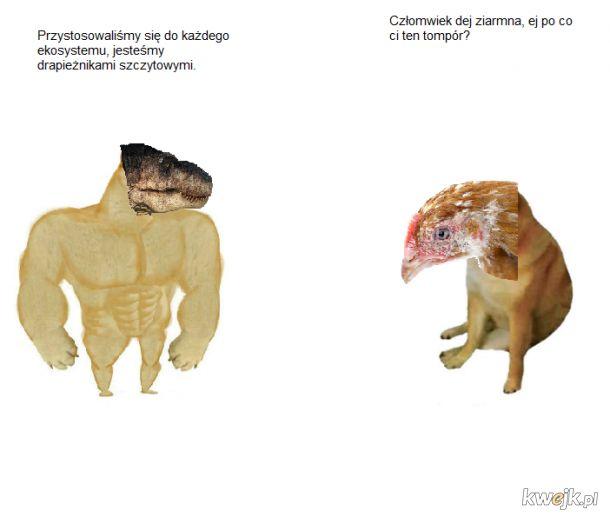 Dinozaury w Jurze i Kredzie vs Dinozaury w Holocenie