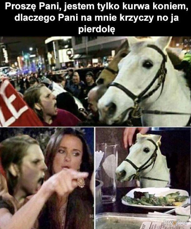 Krzyczenie na konia