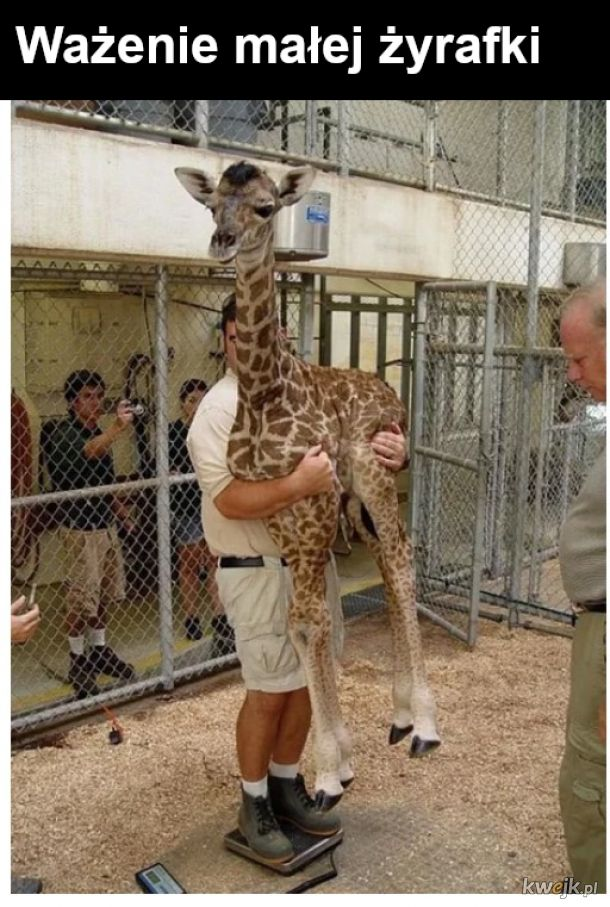 Masa człowieka i żyrafy odjąć masa człowieka równa się masa żyrafy