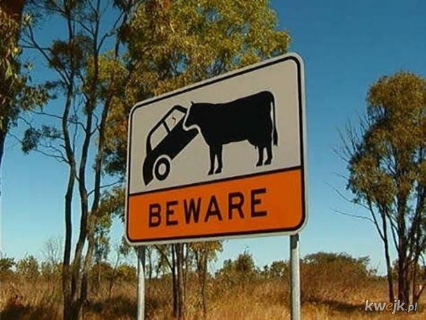 Bardzo australijskie zdjęcia
