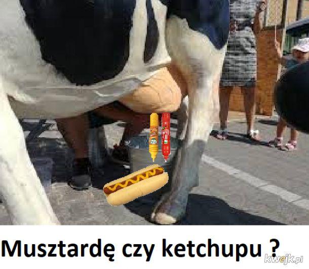 Musztardę czy ketchupu ?