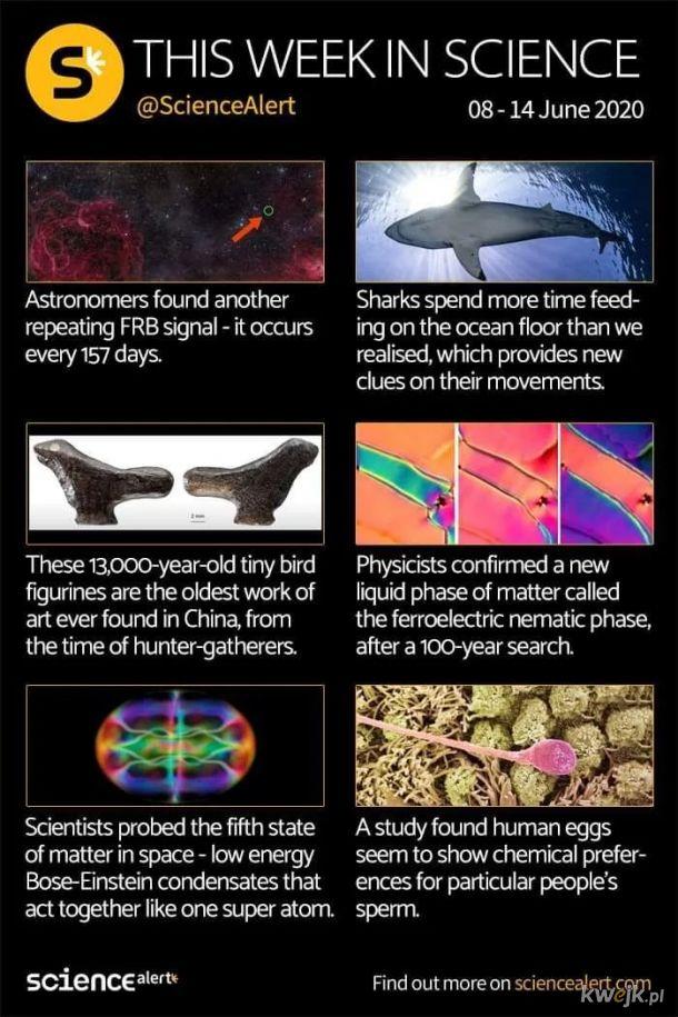 Naukowy newsflash