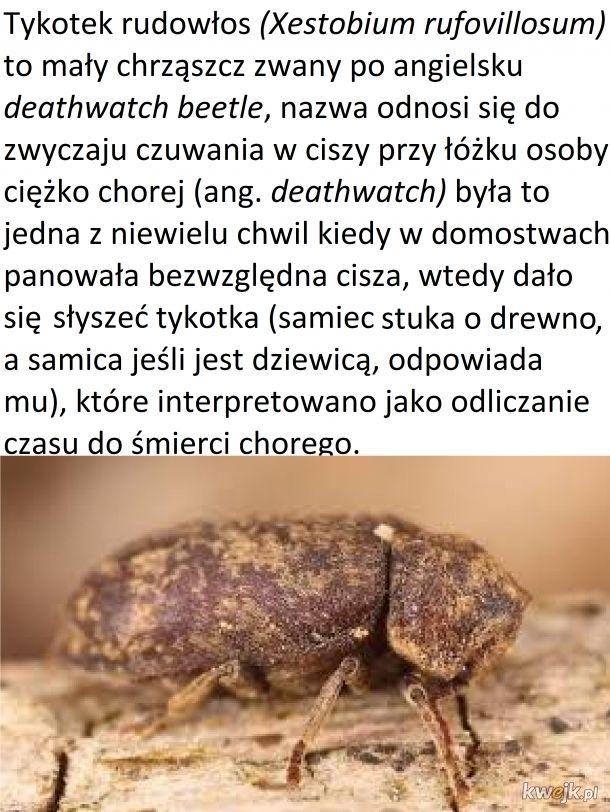 Czwartek z owadzią ciekawostką #5