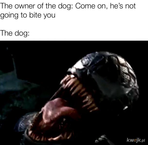 Venom Doggo,co za słodziak