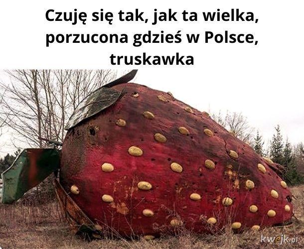 Ktoś wie, gdzie ta truskawa? Przytuliłbym.
