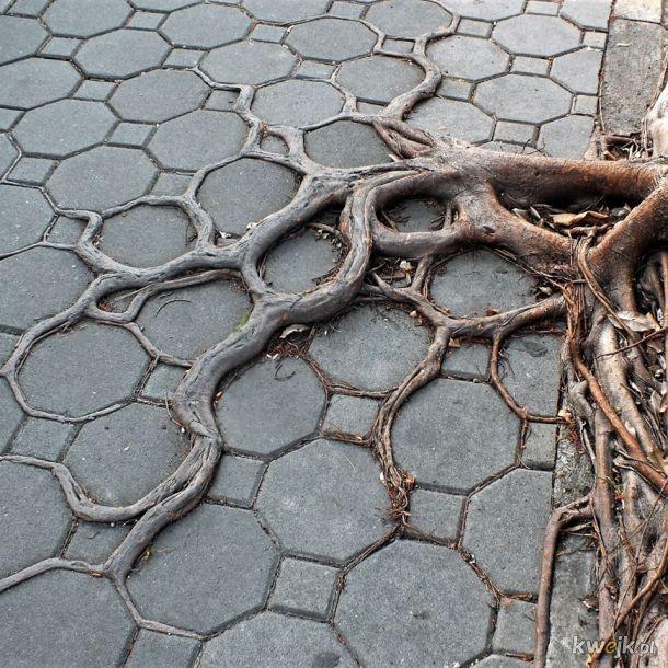 Drzewo o geometrycznie wyhodowanych korzeniach