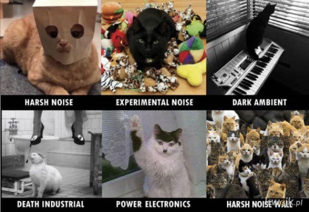 Koty wam to zobrazują Zdrowa Dawka HARSH NOISE #9