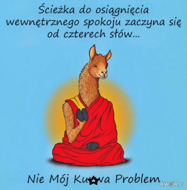 Mądra lama radzi