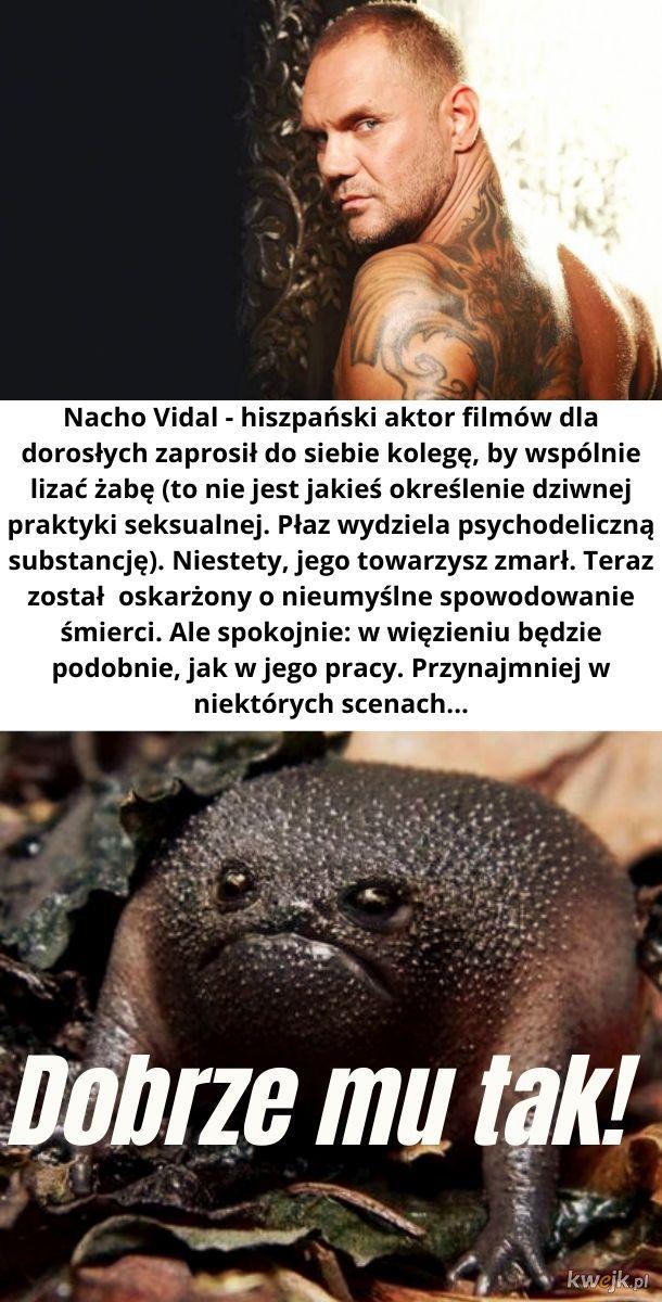 Dlatego nie należy lizać żaby