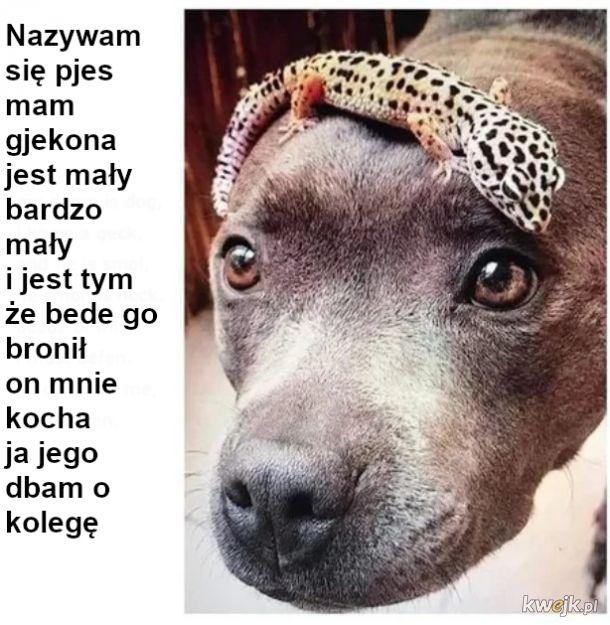 Pies i gekon