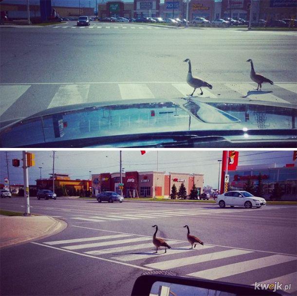 Bardzo kanadyjskie zdjęcia, obrazek 28