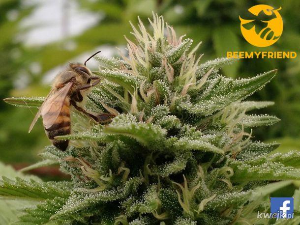 Pszczoła na kwiatku ;)