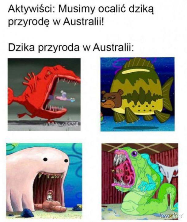 Przyroda w Australii