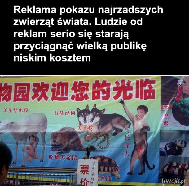 Chiny, to taka trochę druga Rosja, czyli stan umysłu, obrazek 11