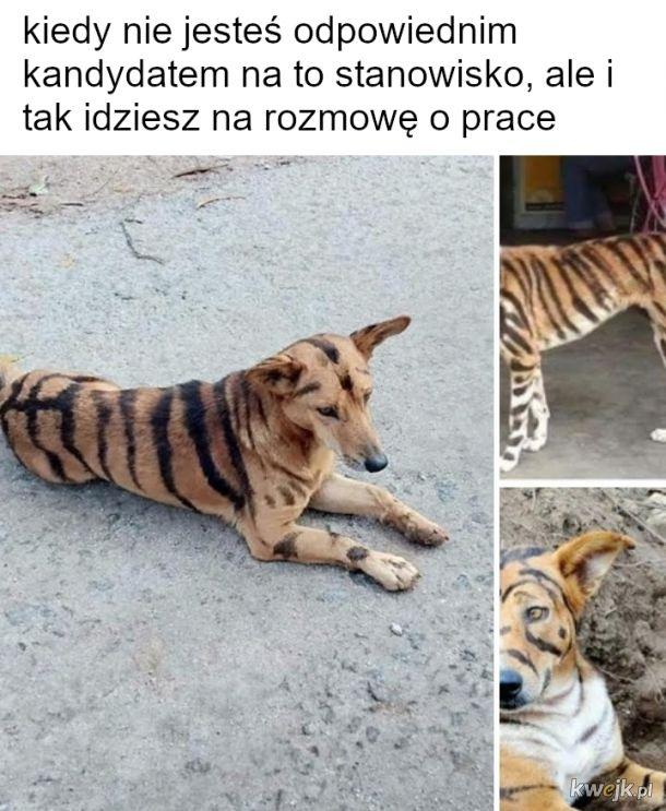 Tygrys i kumple z dżungli