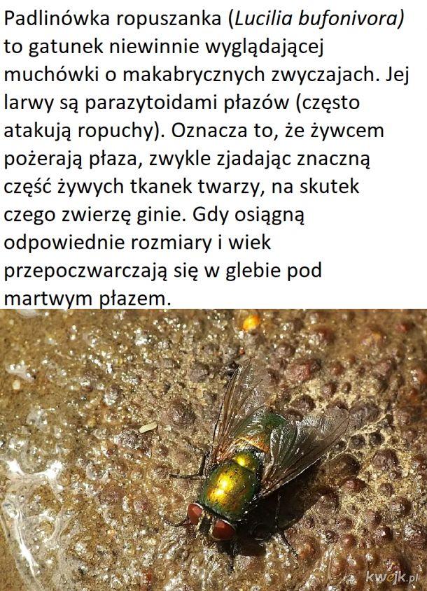 Czwartek z owadzią ciekawostką #6