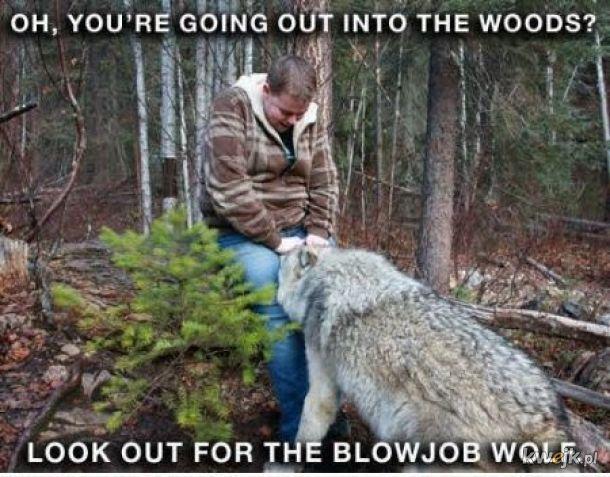 Co cię może spotkać w lesie