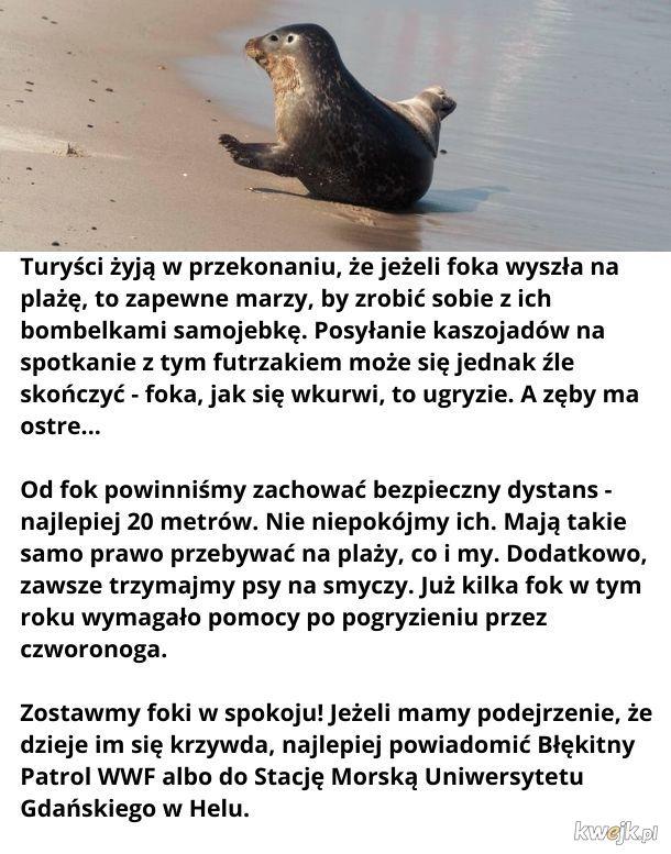Zostawmy foki w spokoju!