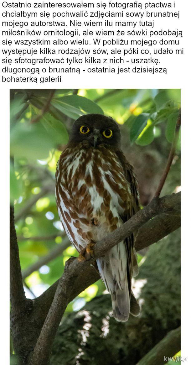 Fotosesja sówki od pana ornitologa amatora