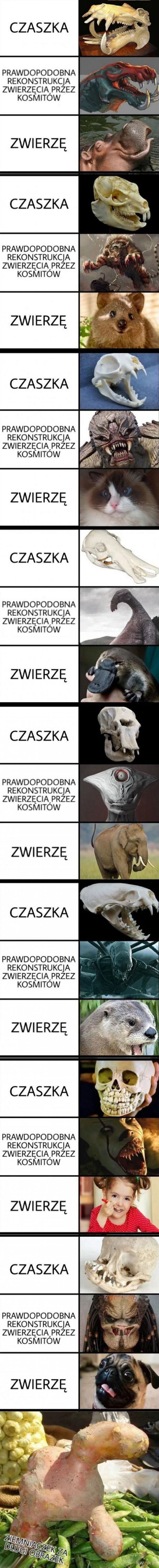 Naukowcy od kości