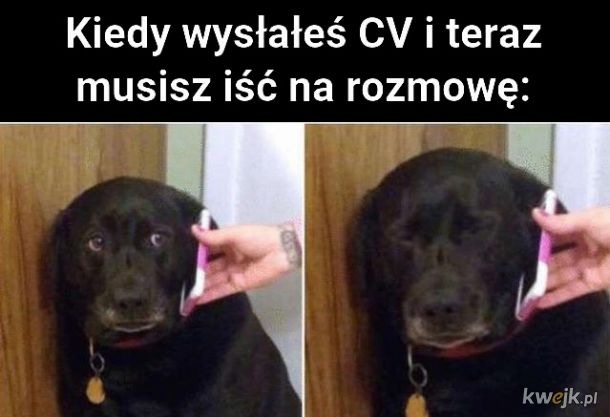Co ja narobił