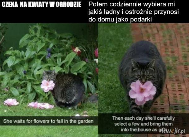 Utuczona kochana kotka