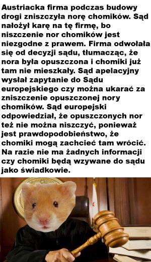 Muszka_Owocówka