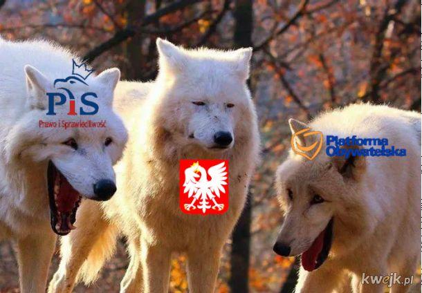 Oficjalne wyniki wyborów: Polska przegrała w pierwszej turze