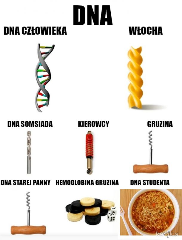 Kwas dezoksyrybonukleinowy