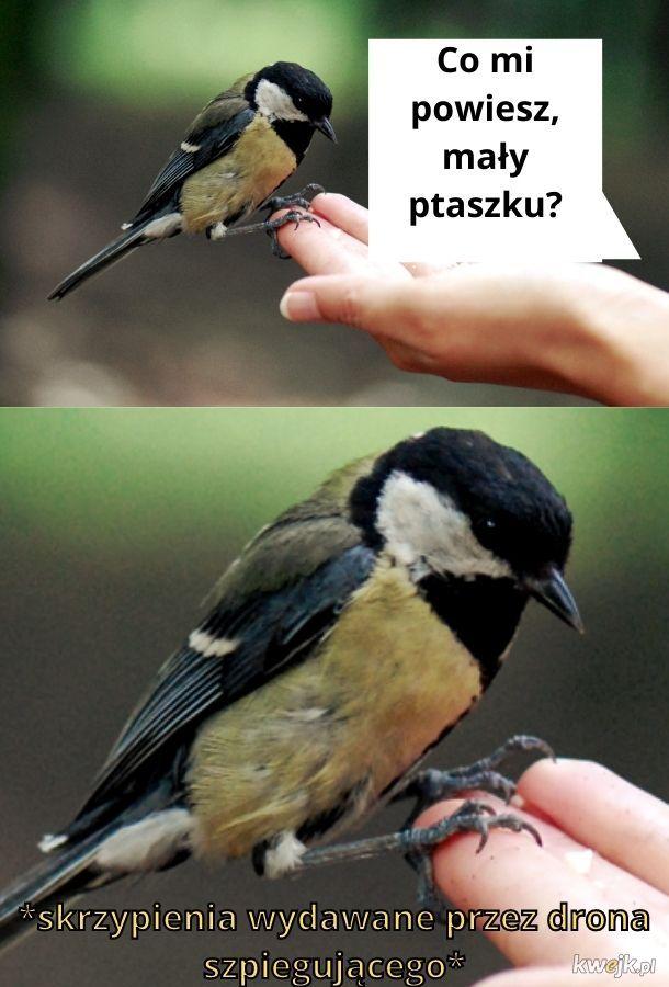 Obudźcie się! Ptaki nie istnieją!