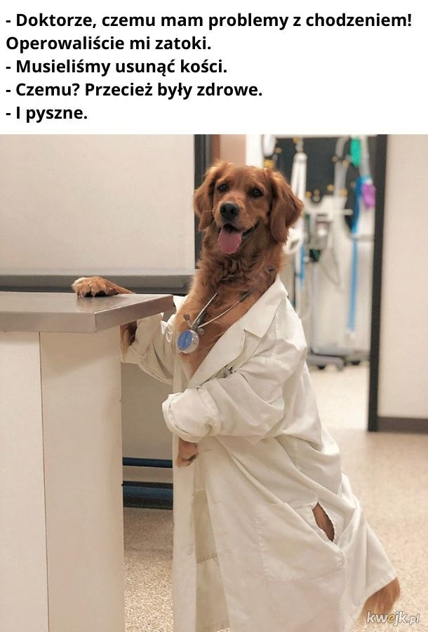 Nigdy nie pozwól operować się psu! To pułapka!