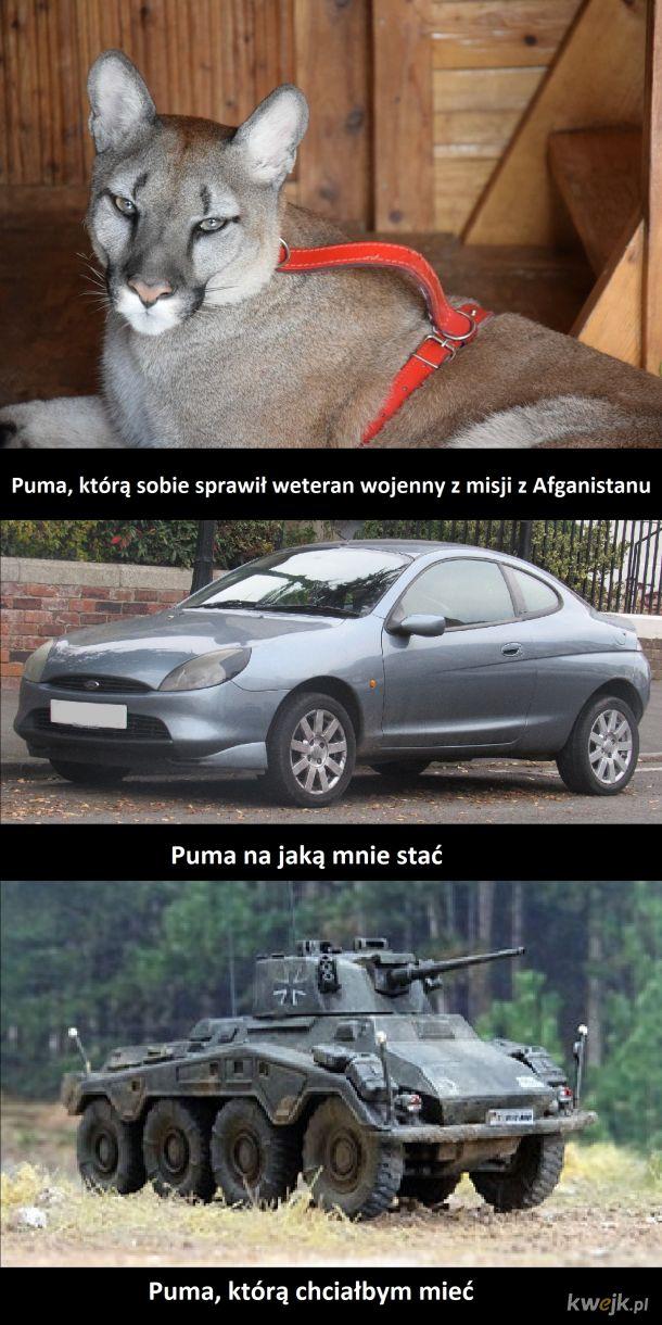 Puma pumie nierówna