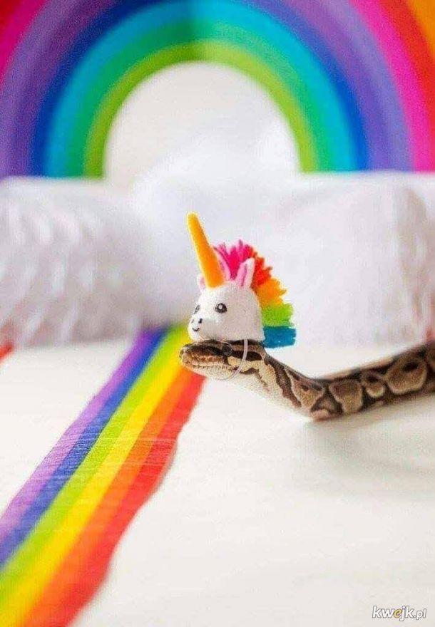 Jestem wężem tęczy