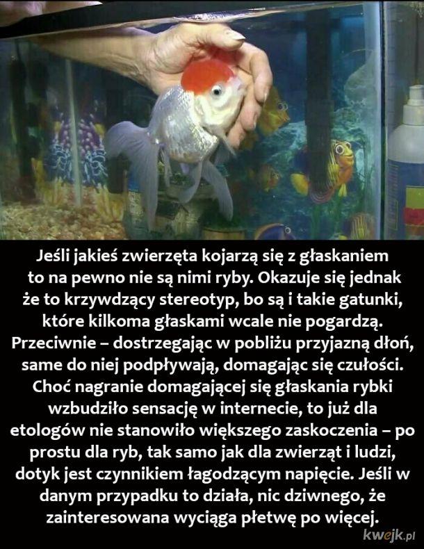 Pogłaszcz rybkę
