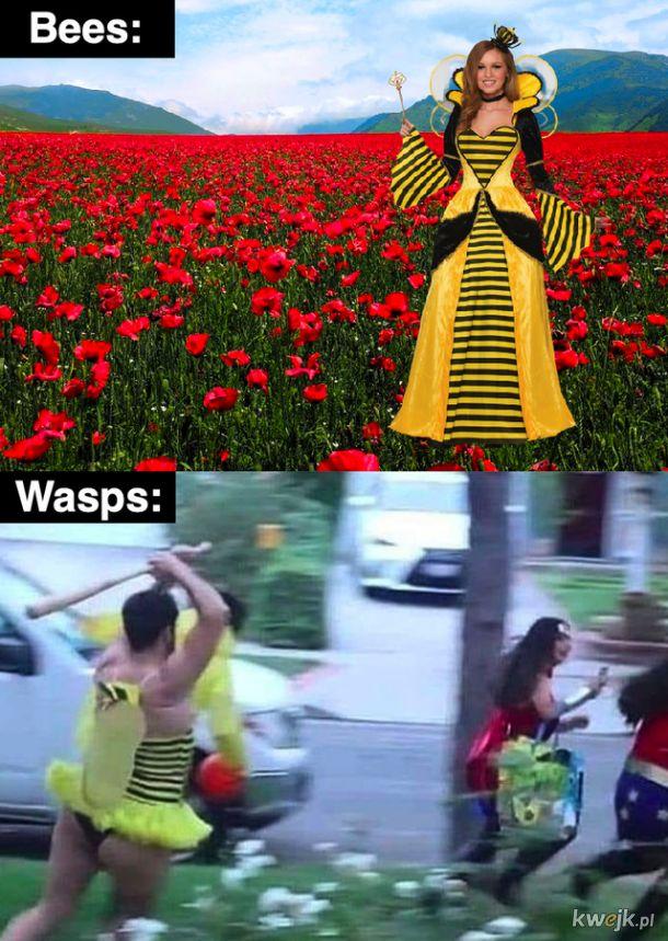 Pszczoły i osy