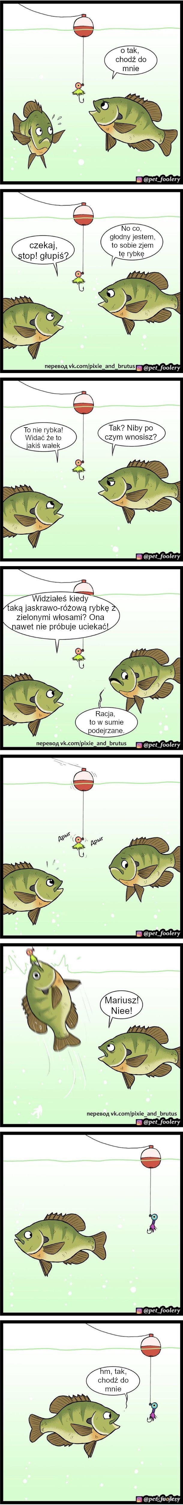 Głupie ryby