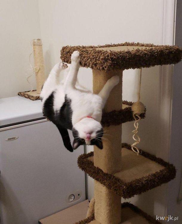 Koty nie uczyły się w szkole fizyki, więc nie muszą stosować się do jej praw