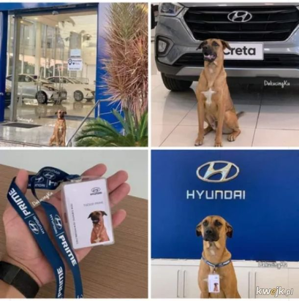Nowy pracownik ochrony Hyundaia