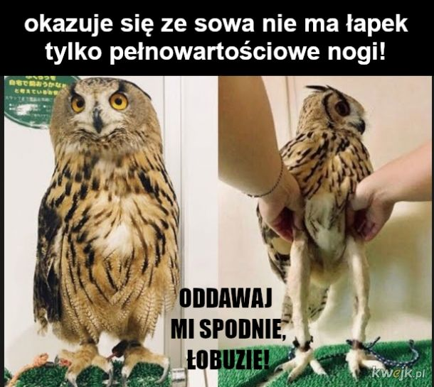 Pół ptaka to nogi