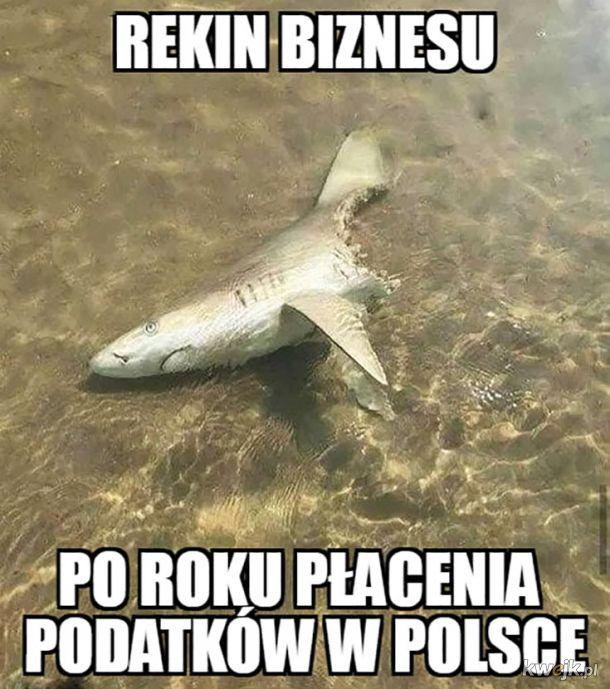 Rekin biznesu