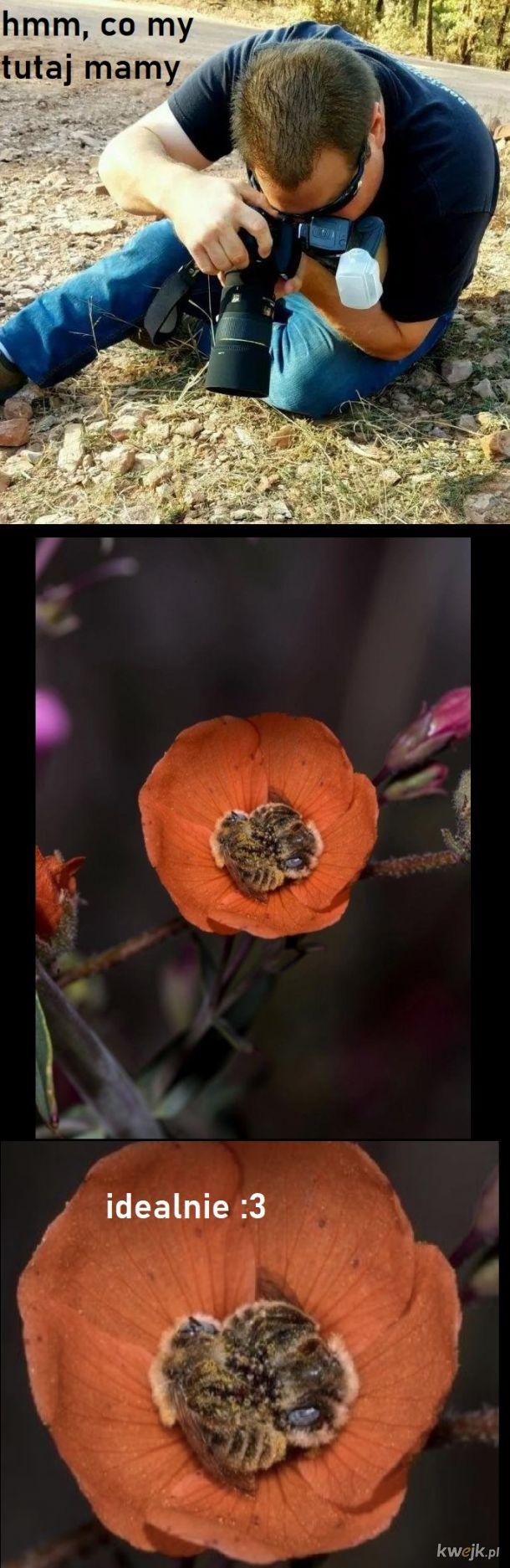 Pszczółki są słodkie