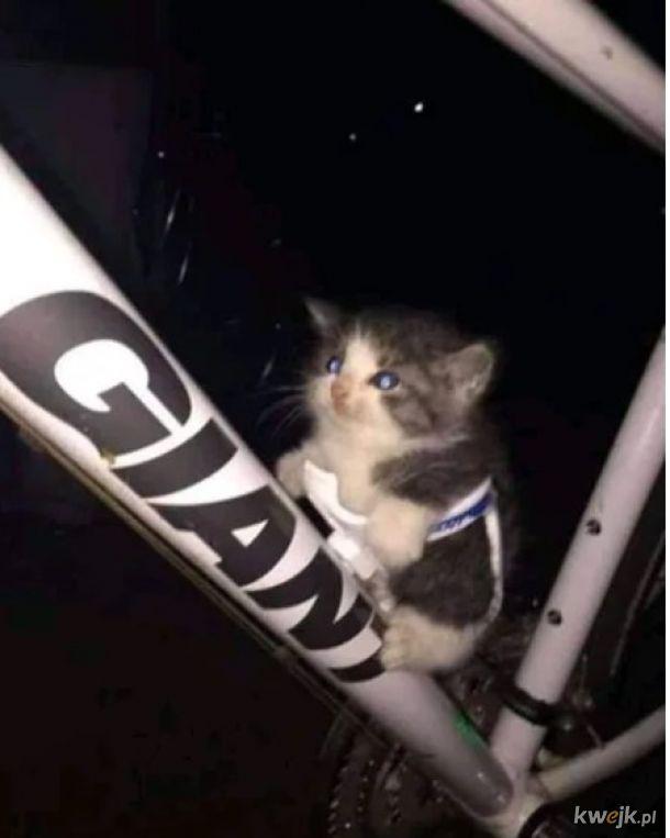 Kotek rowerzysta