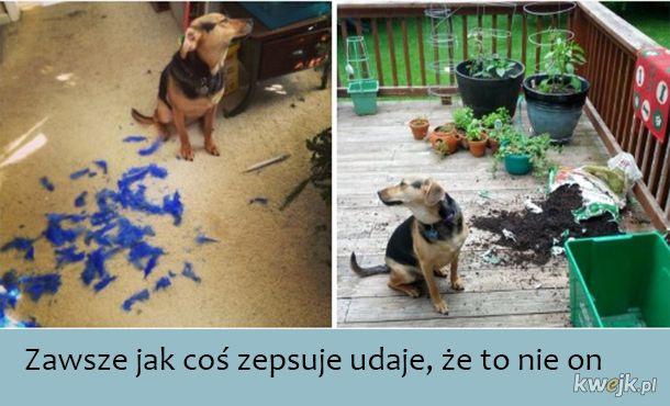 Całkiem pozytywne sytuacje z życia codziennego posiadacza psa