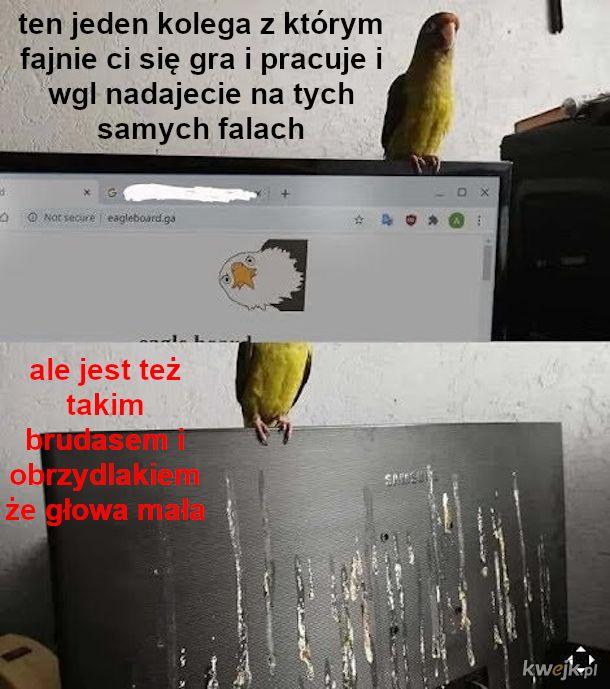 Plusy i minusy posiadania papużki